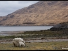 Cape Wrath Trail - Avril 2013