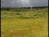 Parc des Hautes-Terres-du-Cap-Breton, Nouvelle-Écosse - Août 2010